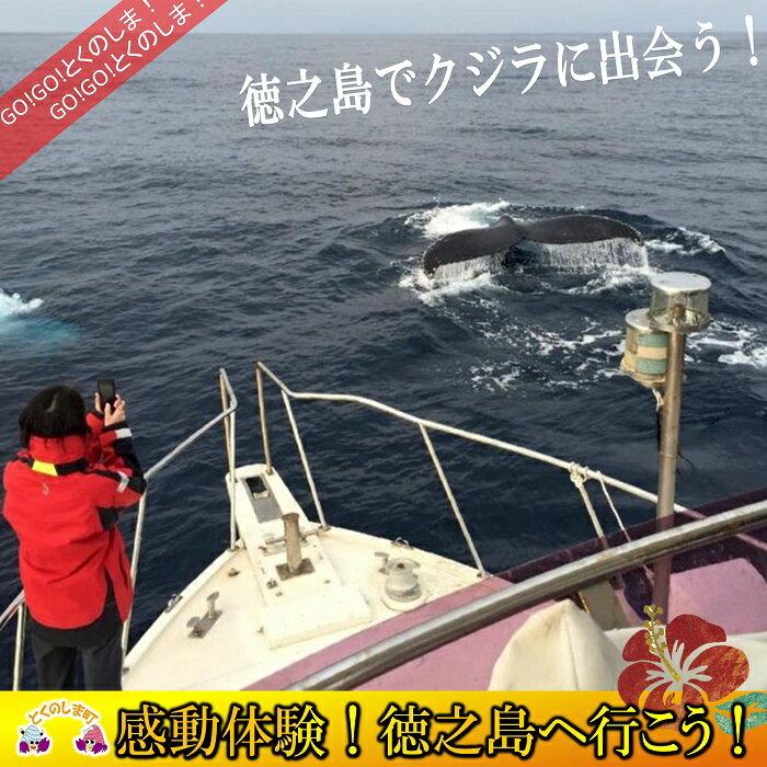 【ふるさと納税】〜さぁ徳之島の海へ旅しよう〜感動の瞬間!クジラウォッチング体験(3時間)