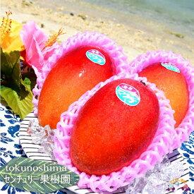 【ふるさと納税】センチュリー果樹園の勝さんが大切に育てた完熟マンゴー(1kg)