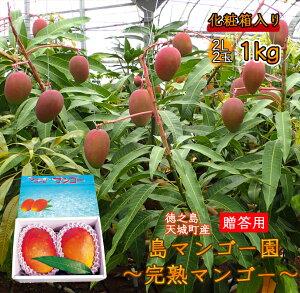 【ふるさと納税】【先行受付!】【贈答用】島マンゴー園の完熟マンゴーA品1kg