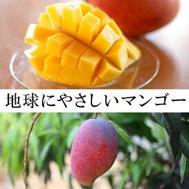 【ふるさと納税】天城町産マンゴー2kg〜地球にやさしい完全無加温栽培〜