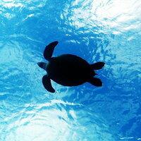 【鹿児島徳之島】体験ダイビング半日券『HAPPYFEWDIVING』