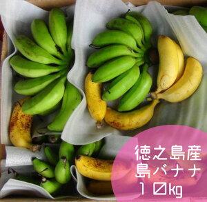 【ふるさと納税】国産 徳之島子宝バナナ 10kg 島バナナ バナナ フルーツ 果物 南国フルーツ くだもの 九州産 送料無料