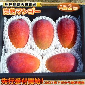 【ふるさと納税】【贈答にもおすすめ】地球に優しい天城マンゴーA品 2kg マンゴー 果物 くだもの フルーツ 贈答用 完全無加温栽培 冷蔵 天城町産 国産 送料無料
