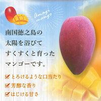 【先行予約】【ご家庭用】完全無加温〜地球に優しい天城マンゴー1kg