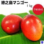 【ふるさと納税】マンゴー1kg
