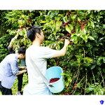 【ふるさと納税】収穫体験1