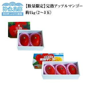 【ふるさと納税】【数量限定】田中マンゴー園の完熟アップルマンゴー2〜3玉1kg