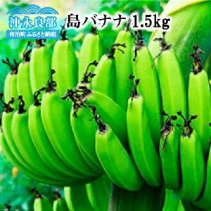 【ふるさと納税】島バナナ 1.5kg/沖永良部島産【幻のバナナ】