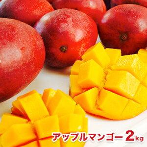 【ふるさと納税】先行予約!南城市産アップルマンゴー2kg