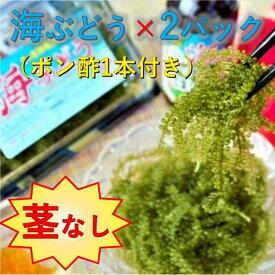 【ふるさと納税】【美ら海沖縄県東村産】茎なし海ぶどう2パックセット(ぽん酢付き)