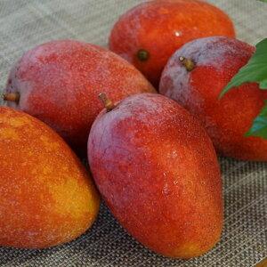 【ふるさと納税】農家直送! 東村産の完熟マンゴー 約2kg(4〜6玉)