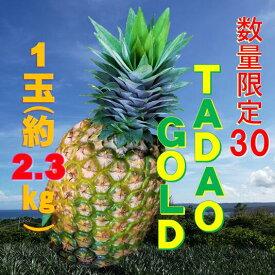 【ふるさと納税】数量限定30【TADAO GOLD】1玉 約2.3kg 2020年6月頃〜順次発送予定〜