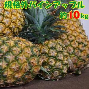 【ふるさと納税】【超目玉!】ボリューム満点!規格外パインアップル約10kg