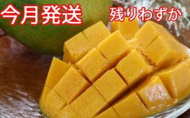 【ふるさと納税】緑のマンゴー・キーツ(1.5kg)今年9月発送