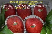 【ふるさと納税】【先行予約】【2020年7月〜8月頃発送】生産者直送今帰仁マンゴーA級品2kg