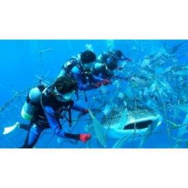 【ふるさと納税】<2名様>圧巻!ジンベエザメ体験ダイビング