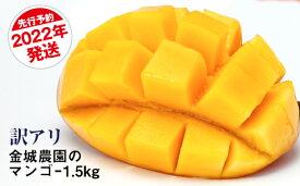 【ふるさと納税】【訳あり】2022年発送 金城農園のマンゴー1.5kg