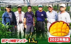 【ふるさと納税】【訳あり】2022年発送 生産組合から直送!神里マンゴー1.5kg
