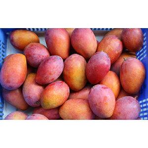 【ふるさと納税】【2020年発送 家庭用】ミナミマンゴーハウスの完熟マンゴー約1kg