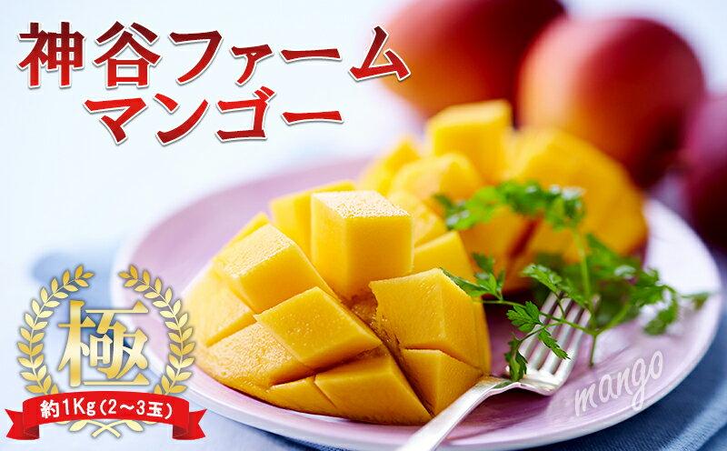 【ふるさと納税】【2019年発送】神谷ファームのマンゴー(極)約1Kg(2〜3玉)