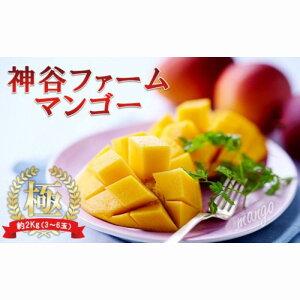 【ふるさと納税】【2020年発送】神谷ファームのマンゴー(極)約2Kg