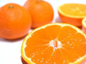 低農薬 和歌山産 ネーブル オレンジ 約 10kg サイズ混合 バラ詰め 贈答向け品質 産地直送 1t