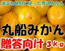 和歌山県有田産丸船みかん贈答用S〜2Lサイズ3kg15〜40個入有田みかん有田ミカン