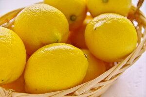 無農薬 訳あり 国産 樹成り レモン 10kg 熊本産 産地直送 NG