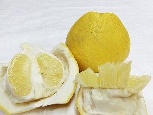 2021分予約 訳あり 低農薬 熊本産 パール柑 約10kg サイズ混合 大橘 サワーポメロ 産地直送