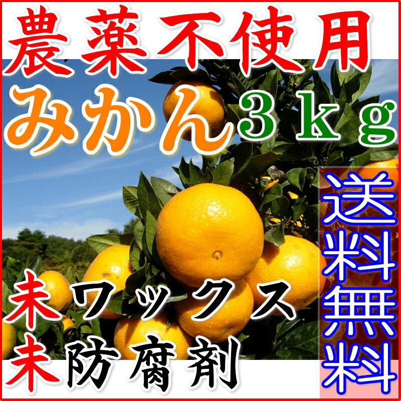 【訳あり】無農薬 愛媛みかん 約3kg みかん サイズ混合 産地直送 ore