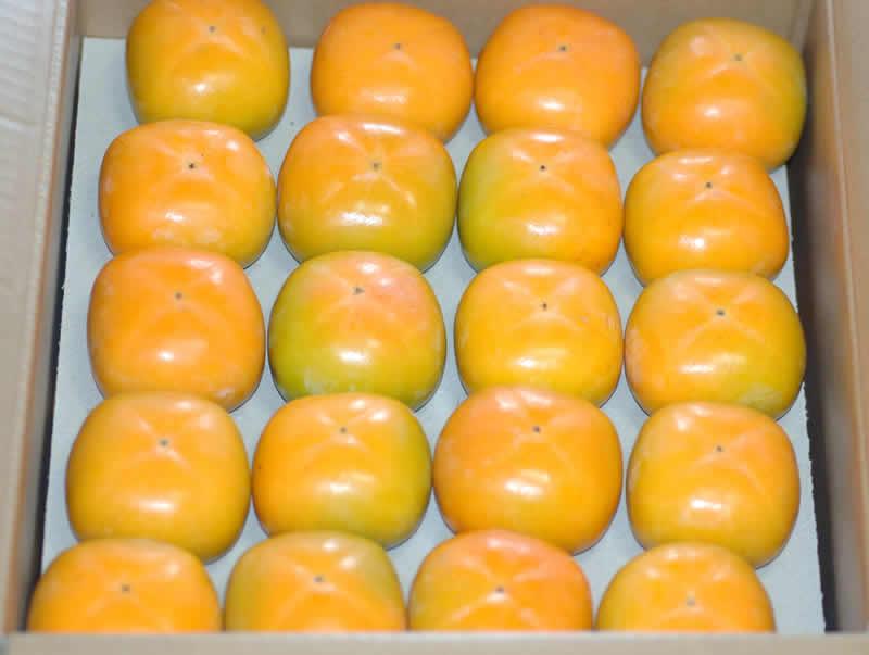 2019年分予約 柿 種なし柿 約7.5kg 36〜40個入 M〜L 贈答用 秀品 たねなし柿 種無し柿 平核無柿 刀根柿