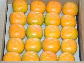 2021年分予約 訳あり 柿 種なし柿 約7.5kg 36〜40個入 M〜L たねなし柿 種無し柿 平核無柿 刀根柿 SSS 10t