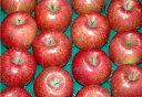低農薬サンふじりんご贈答用4.5kg小玉18〜20個お歳暮ギフト