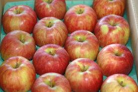 2021年分予約 サンつがる りんご 贈答用 約10kg 大玉28〜32玉入 SSS