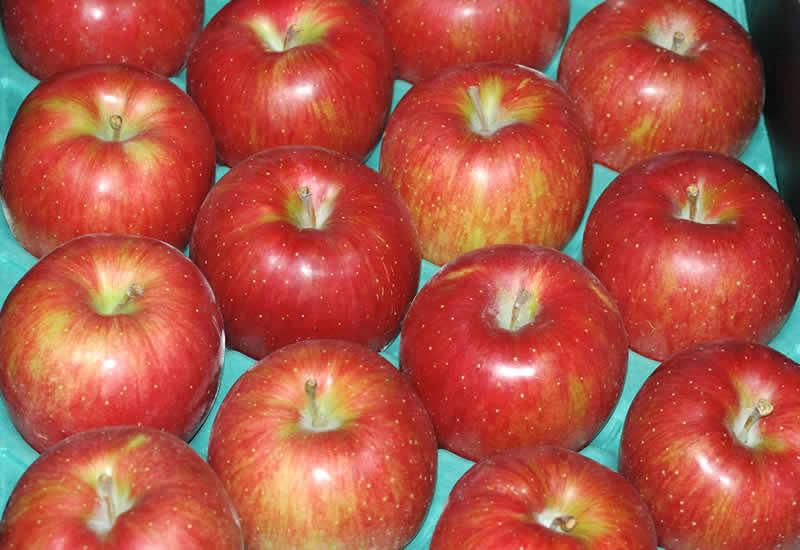 【訳あり】減農薬 長野 シナノスイート りんご 約9kg 16〜50個入 リンゴ 林檎 産地直送 小山