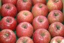 減農薬 サンふじ りんご A品 約4. 5kg 12〜23個入 長野 リンゴ 林檎 さんふじ サンフジ 産地直送 小山 SSS 3h