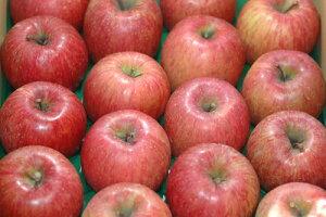 【12月出荷】減農薬 サンふじ りんご B品 約4. 5kg 12〜23個入 長野 リンゴ 林檎 さんふじ サンフジ 小山 SSS