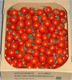 全額返金保証 甘い 808 ミニトマト 2kg 房なし プチトマト フルーツトマト 和歌山産 SSS 3t