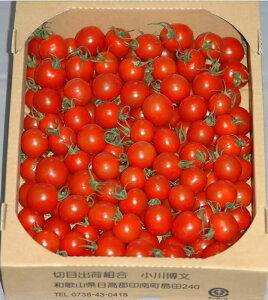 2021年分予約 全額返金保証 甘い 808 ミニトマト 2kg 房なし プチトマト フルーツトマト 和歌山産 お歳暮
