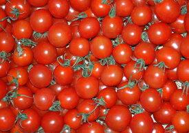 全額返金保証 甘い 808 ミニトマト 1kg 房なし プチトマト フルーツトマト 和歌山産
