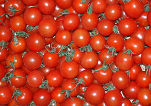2021年分予約 全額返金保証 甘い 808 ミニトマト 250g 房なし プチトマト フルーツトマト 和歌山産 お歳暮