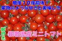 【ポイント10倍+10%OFFクーポン対象】高糖度10度 和歌山産 ミニトマト 1.5kg 房付き フルーツトマト