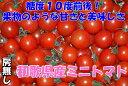 高糖度10度 和歌山産 ミニトマト 250g 房なし フルーツトマト