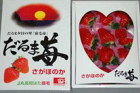 2021年分予約 高知県産 だるま苺 大粒12粒〜15粒 化粧箱入 いちご イチゴ S10 1t