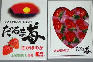 2021年分予約 高知県産 だるま苺 大粒12粒〜15粒 化粧箱入 いちご イチゴ S10