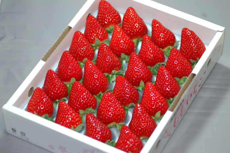 【10%OFFクーポン対象】徳島産 さくらももいちご24〜28粒 約700g 化粧箱入