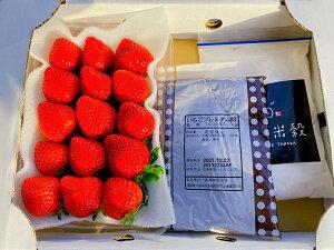 【12月出荷】低農薬 福岡 あまおう いちご 大福 キット 苺 イチゴ 手作り 体験 セット 産地直送 SSS