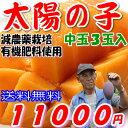 減農薬 マンゴー 太陽の子 中玉3玉 約900g〜1kg 化粧箱入 贈答用 父の日 ギフト 宮崎 産地直送