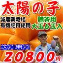 減農薬 宮崎マンゴー 太陽の子 お徳用 A品 大玉 6玉 約2.2kg〜2.4kg入 贈答用