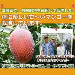 減農薬マンゴー太陽の子3L大玉1玉450〜500g化粧箱入贈答用ギフト宮崎産地直送